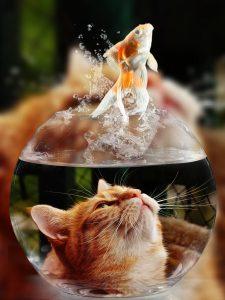 Verzorging van katten en vissen