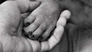 Algemene voorwaarden van Huisdierenservice met Plaisier